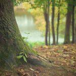 Śliczny i {miły dla oczu ogród to nie lada wyzwanie, w szczególności jak jego konserwacją zajmujemy się sami.